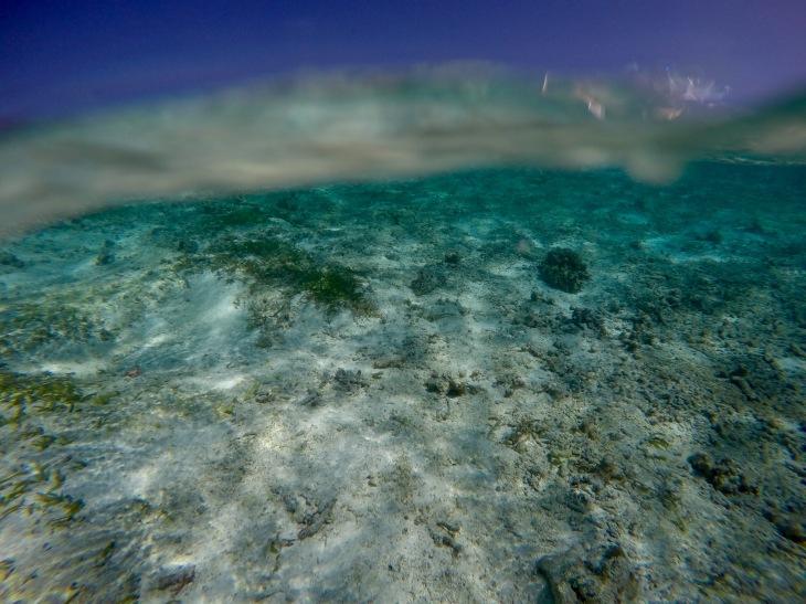 Underwater View, Maldives © Hailey Edy