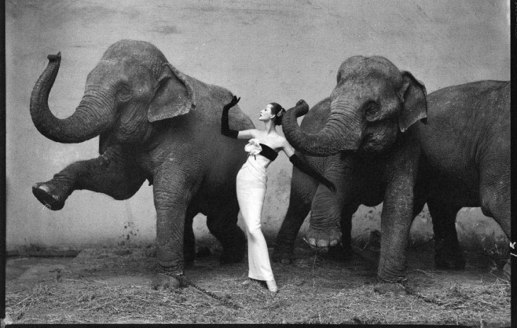 Dovima with the Elephants/ ©iconic photos